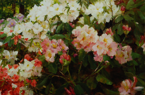 Rhododendron and Azalea by Kathy Anderson