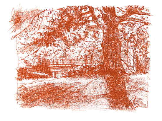 Conte crayon drawing of old oak tree, by John Hulsey