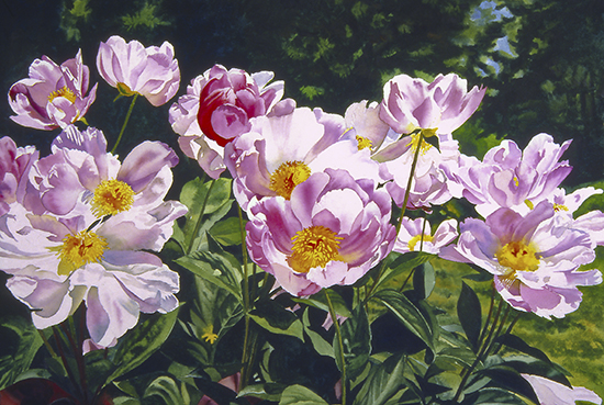 watercolor painting of peonies by John Hulsey
