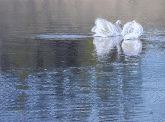 Devon Swans by Toby Haynes