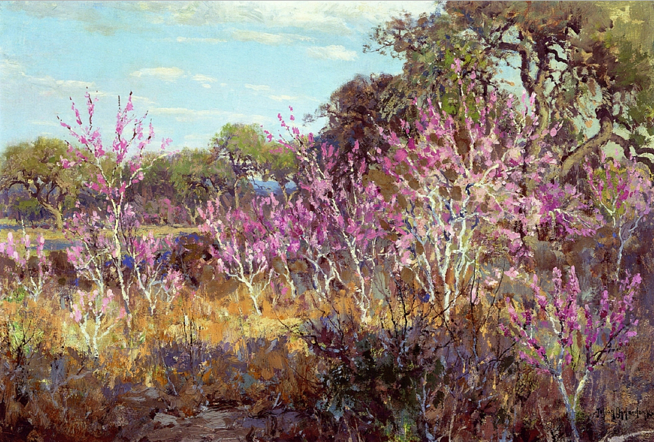 Redbud Tree in Bloom at Leon Springs, San Antonio, 1921, Robert Julian Onderdonk