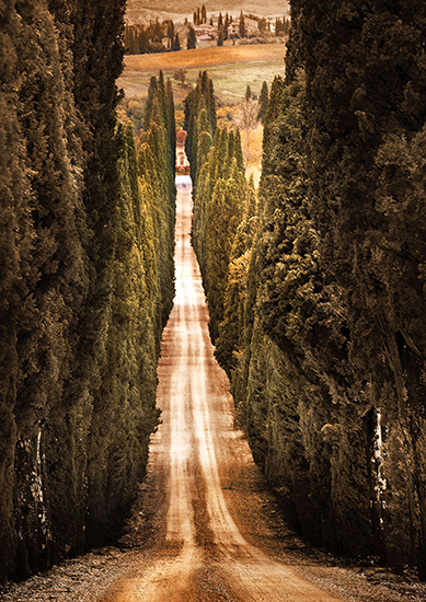 photo of cypress-lined road in Tuscany, Italy© Robert Copeland
