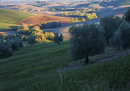 photo of Tuscan fields at day's end. © J. Hulsey painting workshops in Italy