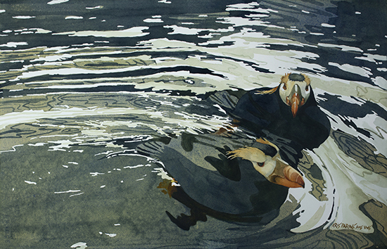 "Tufted Puffins II, watercolor, 14 x 21"", © Kris Parins"
