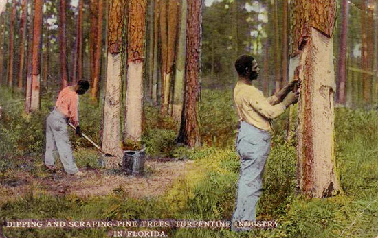 postcard of turpentine workers in Florida