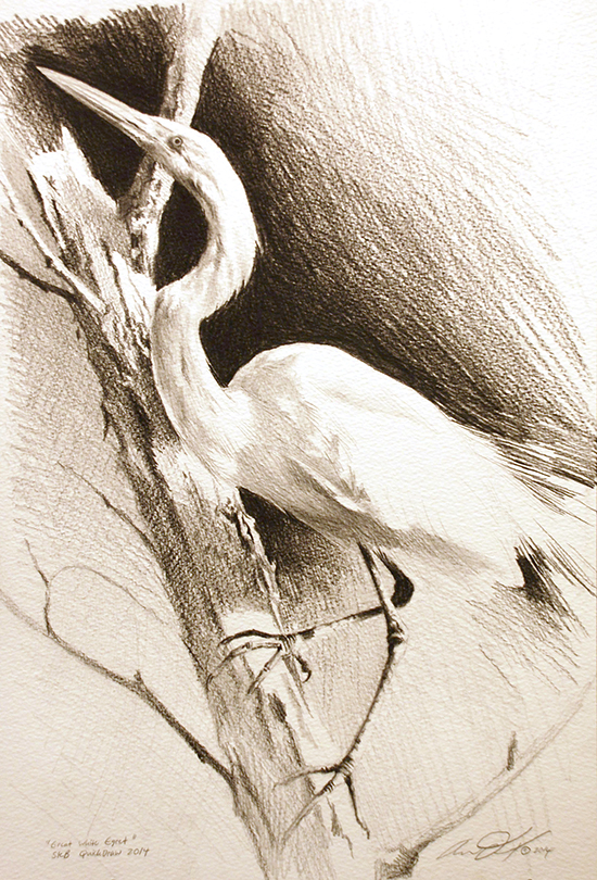 Drawing by Andrew Denman