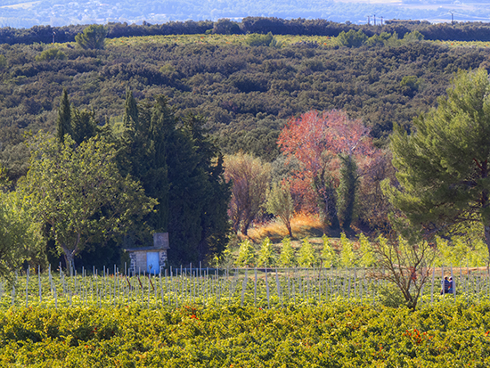 Photo of Vineyards at Chateauneuf-du-Pape, France.