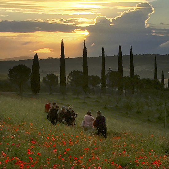 Photo of Tuscany poppy fields at dawn. © J. Hulsey